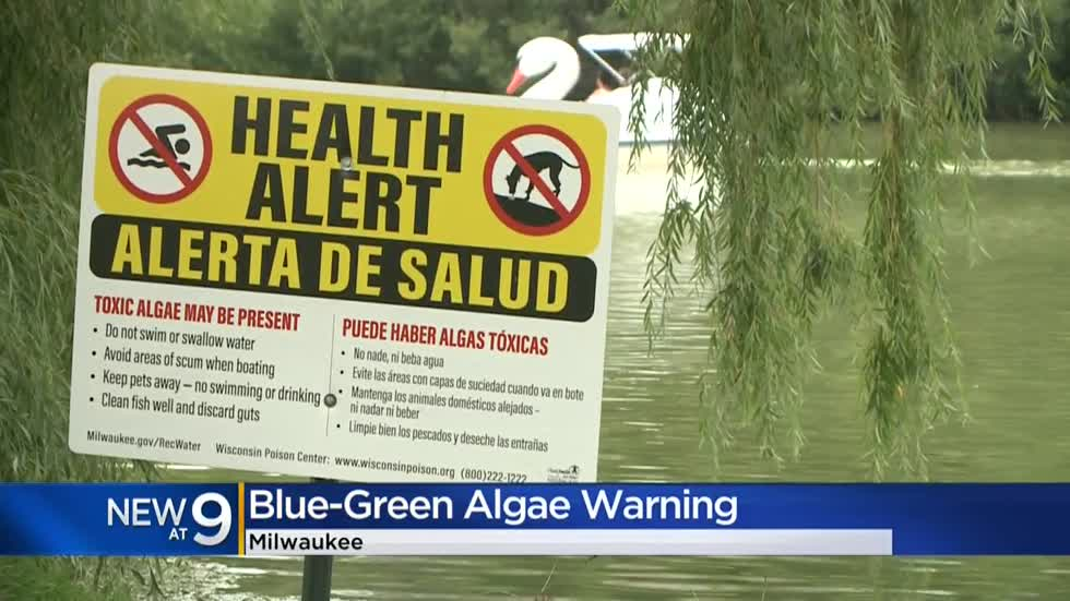 Blue-green algae poisoning to blame for death of dogs, pet parents beware