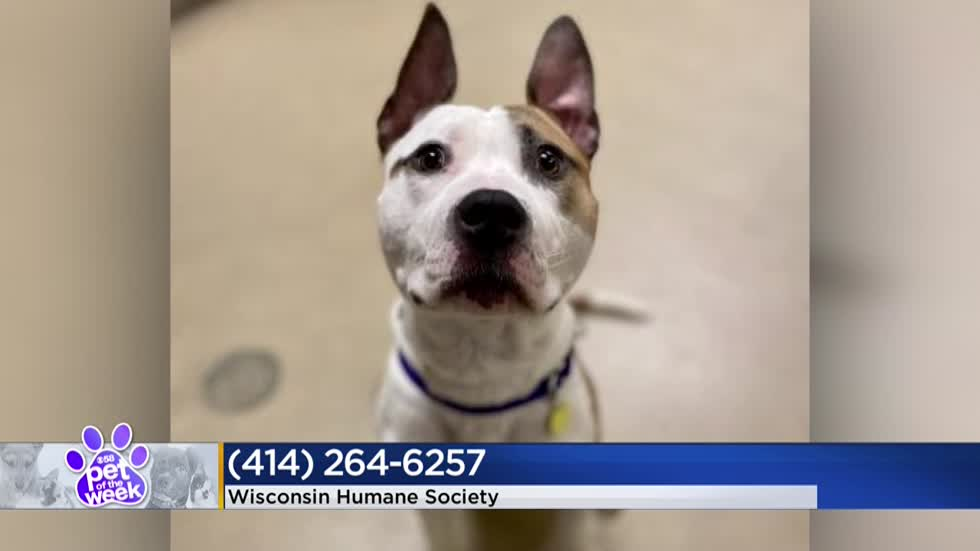 Pet of the Week: 9-month-old Bruce Willis