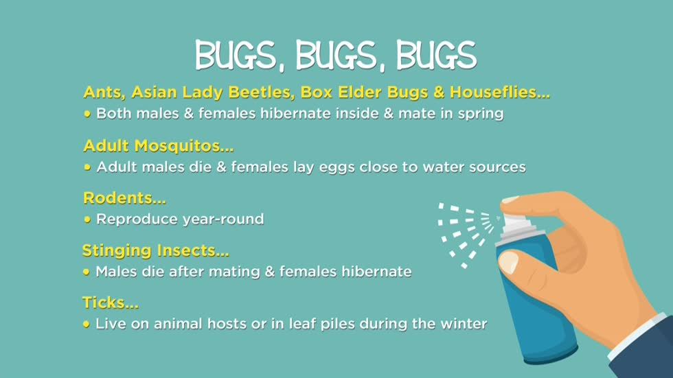 Stop insects from bugging you inside your home