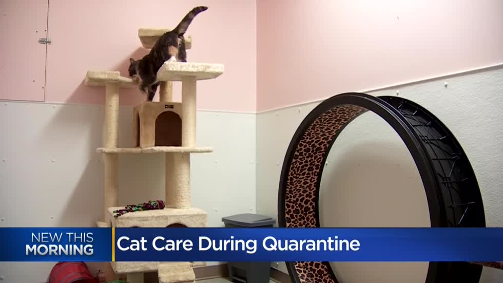 Vet offers cat care advice for pet owners during COVID-19 pandemic