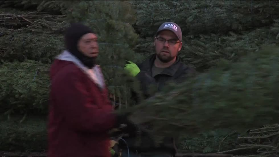 Christmas trees arrive at Milwaukee's Cathedral Square in preparation for Holiday Lights Festival