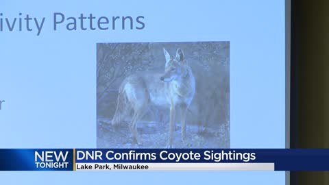 DNR confirms coyote sightings in Milwaukee's Lake Park