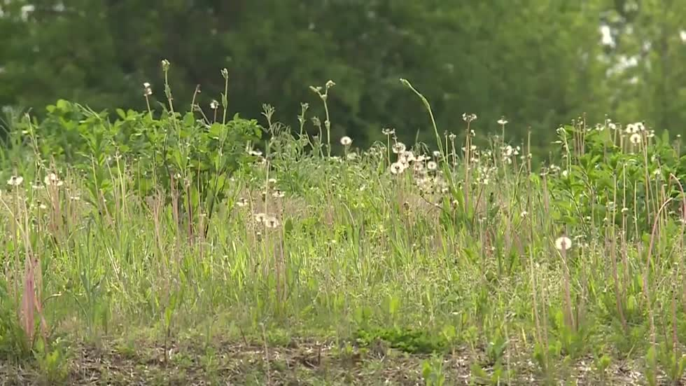 Town of Lisbon may soon vote on new rules regarding grass length