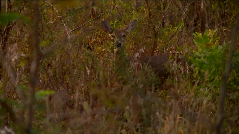 Lawmakers introduce bill aimed at stopping chronic wasting disease