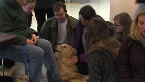 Therapy dogs help Carthage College students de-stress before finals