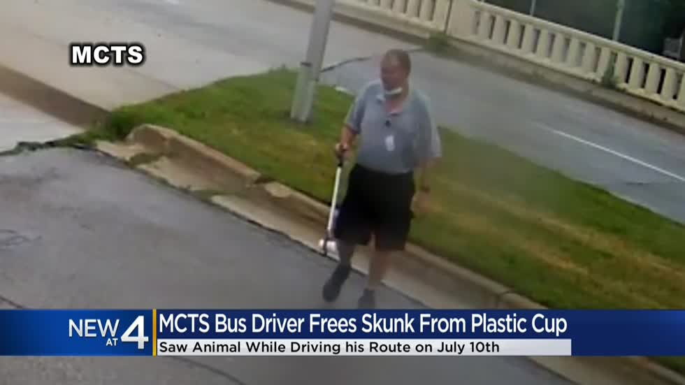 MCTS driver stops to save skunk with yogurt cup stuck on head