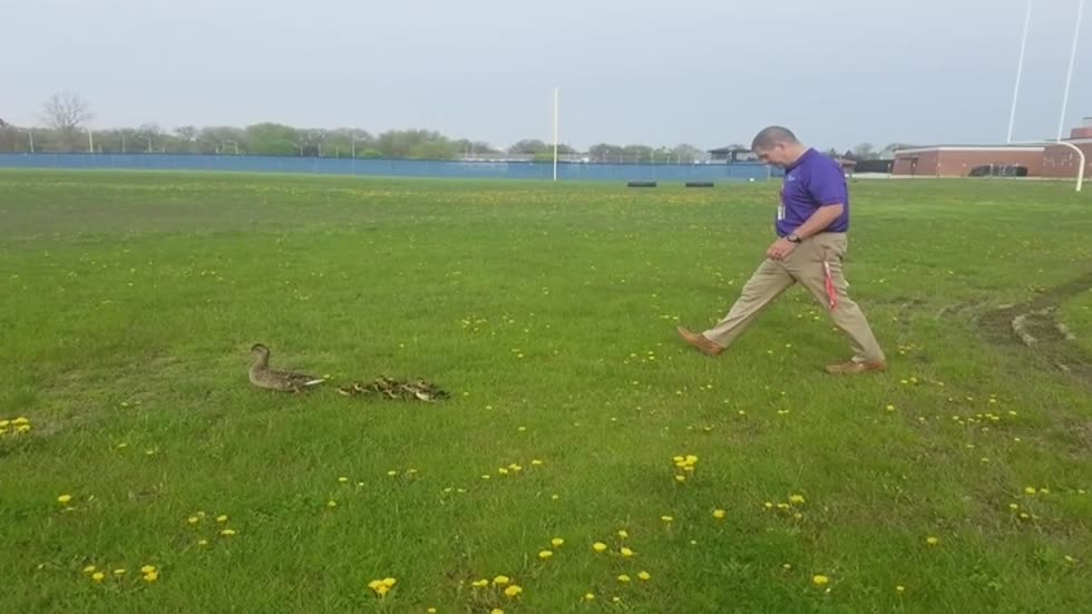 'Duck Parade' tradition at Tremper High School dates back to 1980s