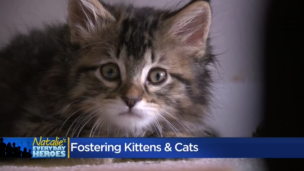 Natalie's Everyday Heroes: Pam Purdy, kitten foster mom