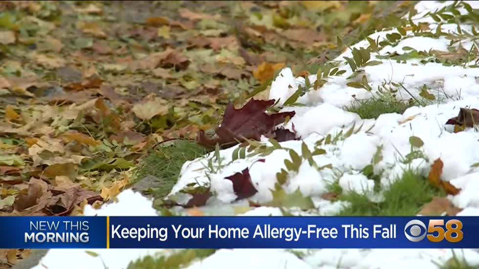 With fall allergy season underway, expert offers advice for keeping...