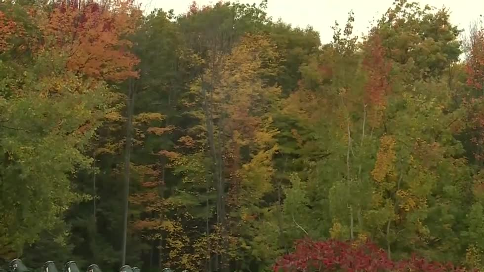 Experts say leaves fell sooner in Wisconsin this year, changing color faster