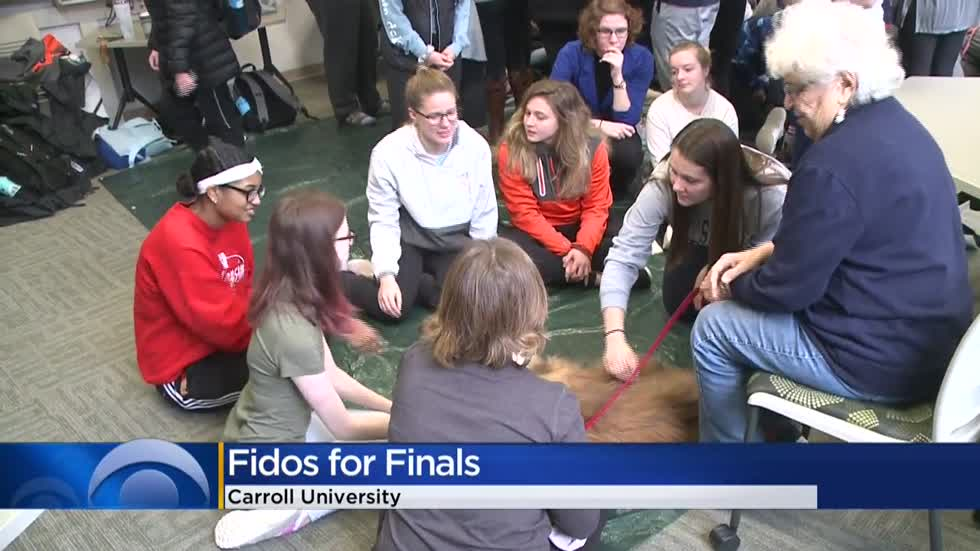 Cute dogs soothe students, staff at Carroll University during final exams