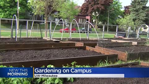 "UW-Milwaukee's gardens help students who are ""food insecure,"" especially during the pandemic"