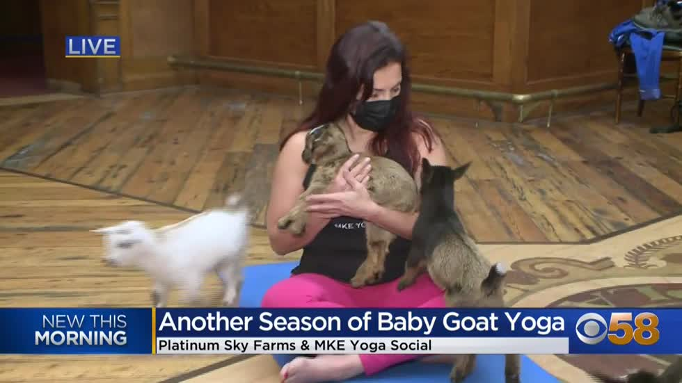 Goat yoga.  Go ahead, try it.  It's a thing.