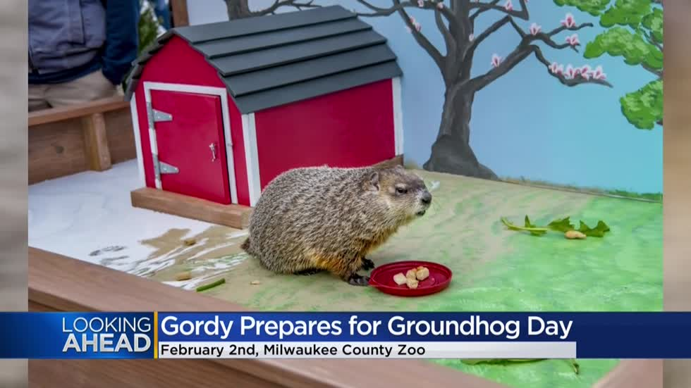 Milwaukee County Zoo's 'Gordy' prepares for Groundhog Day
