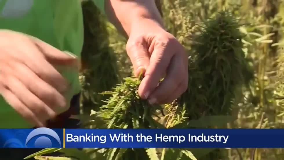 Financial institutions wary of helping businesses in hemp industry due to confusion over regulations