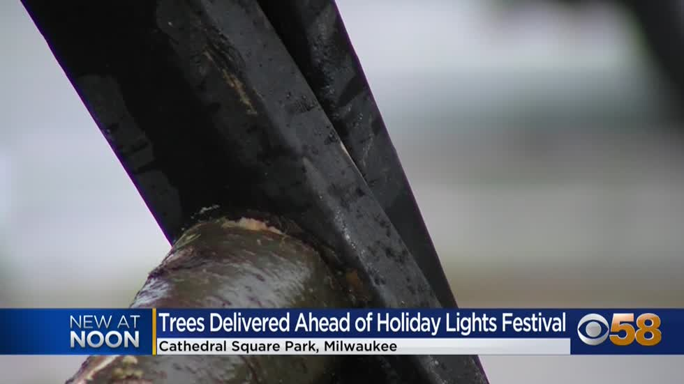 Trees delivered to Cathedral Square to transform park for Holiday...