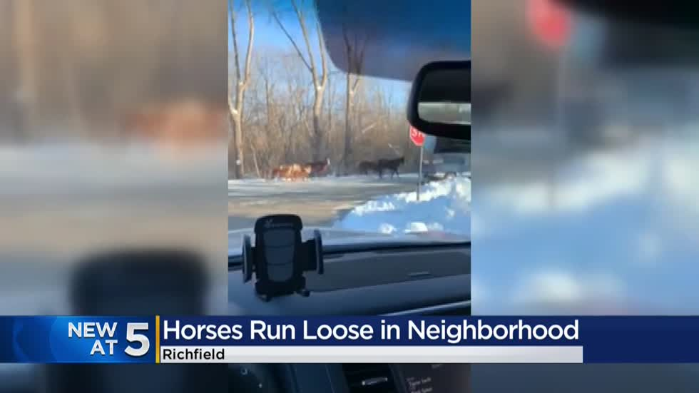 Herd of horses continually breaking out, roaming free on streets of Richfield