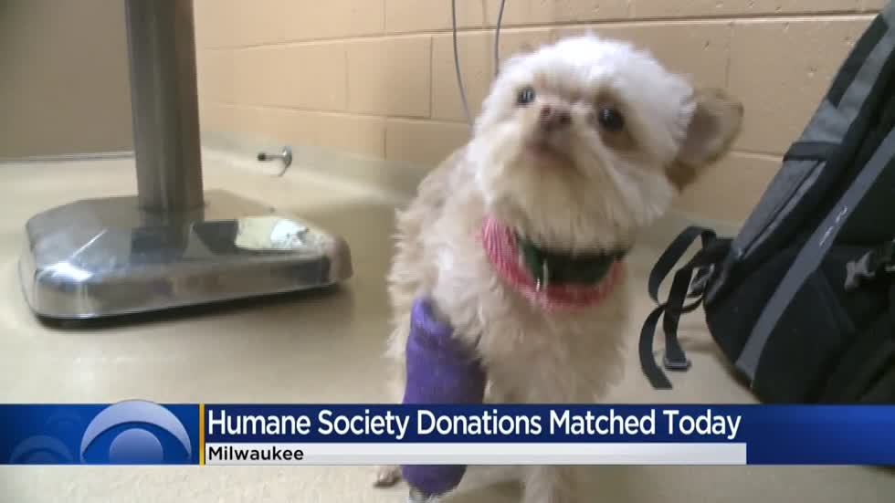 WHS caring for puppy with broken front legs; will match donations on Giving Tuesday