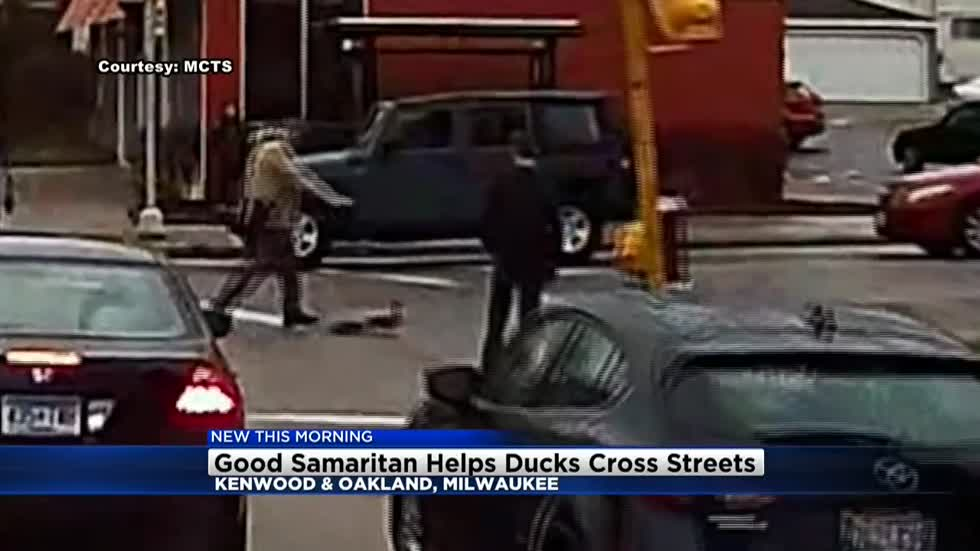 MCTS bus camera captures man helping ducks cross road