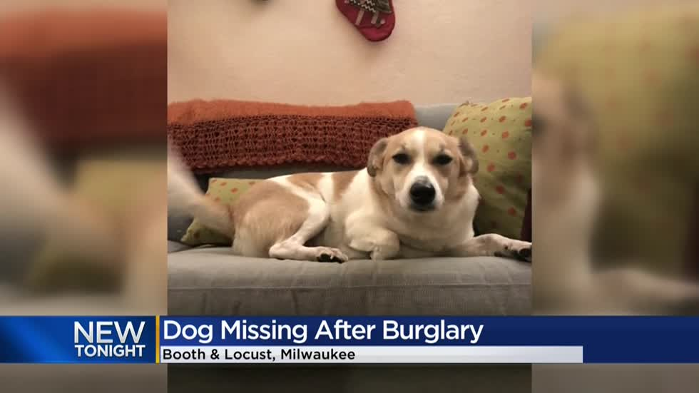 Found safe! Dog couple says was stolen from Riverwest home returned
