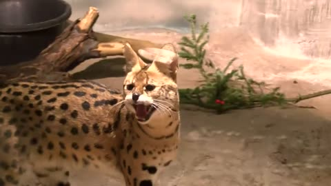 New animals join Milwaukee County Zoo