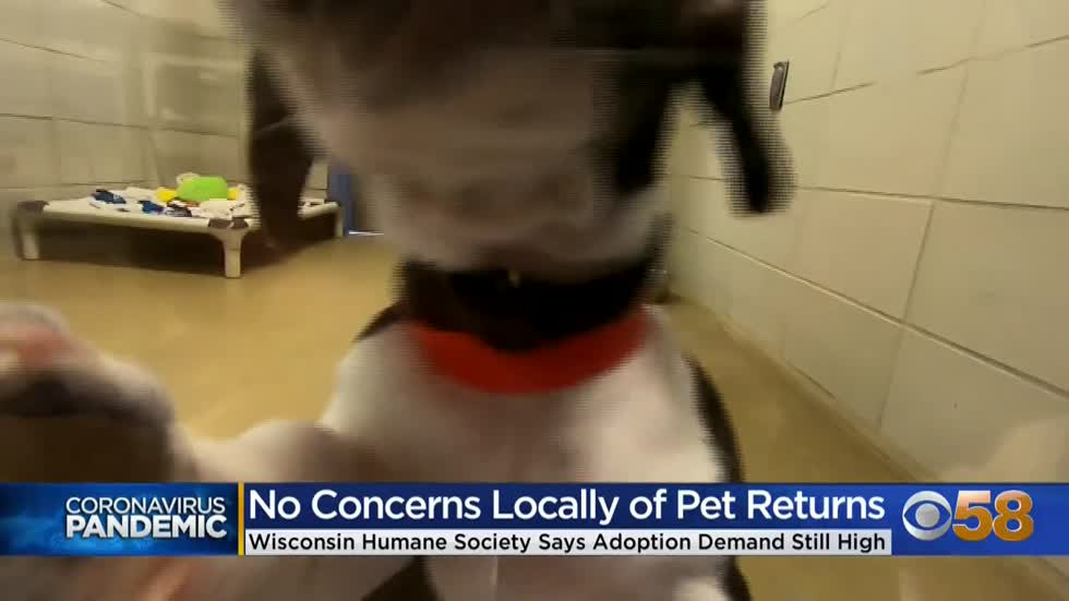 Wisconsin Humane Society says pet adoptions up, no increase in...