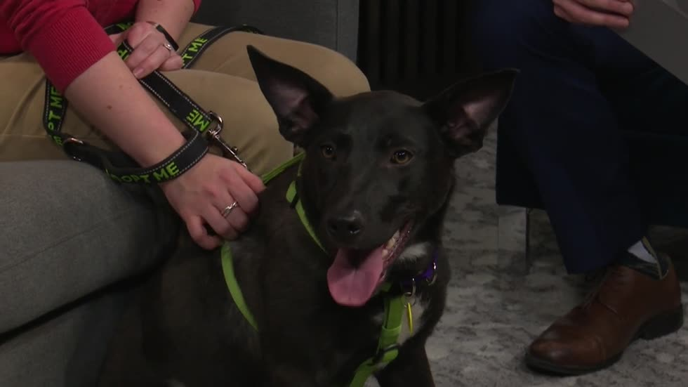 Pet of the Week: 10-month-old Onyx