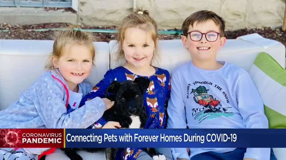 Pets of the Pandemic: Finding forever homes in Southeast Wisconsin