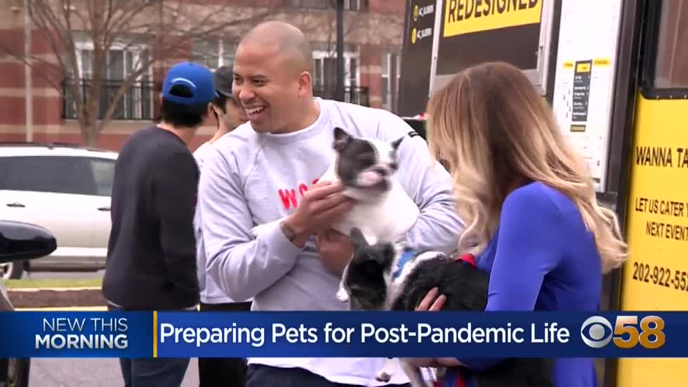Vet offers tips for helping pets adjust post-pandemic