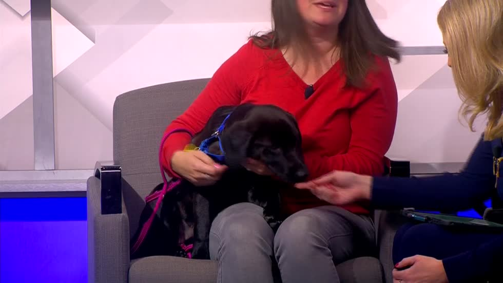 Pet of the Week: 5-month-old Amaya