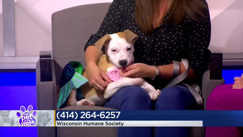 Pet of the Week: 3-month-old Corbin