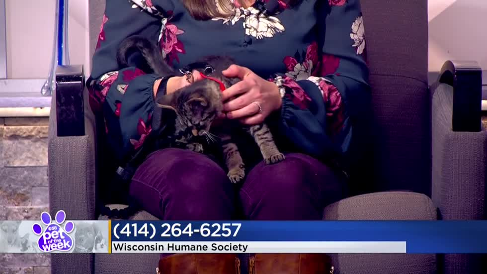 Pet of the Week: 3-month-old kitten Luna