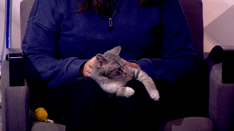 Pet of the Week: 5-month-old kitten Lucky