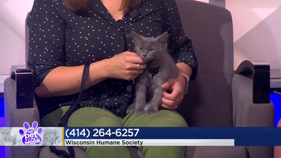 Pet of the Week: 2-month-old kitten Toe
