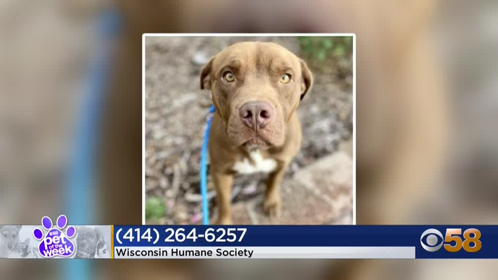 Pet of the week: 1-year-old Rambo