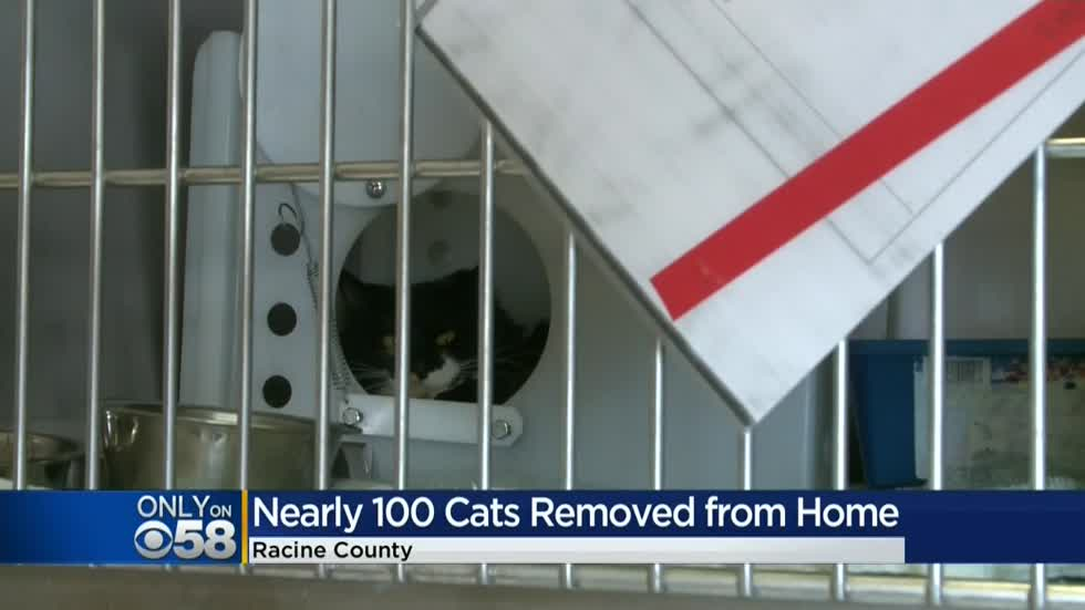 Racine & Me: Humane Society talks about surrender of 100 cats