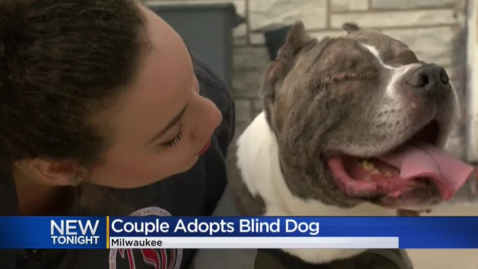 Couple adopts blind dog that stole hearts across Wisconsin