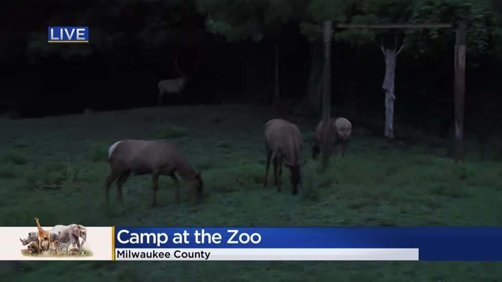Family camp out among the animals at Milwaukee's 'Snooze at the Zoo' event