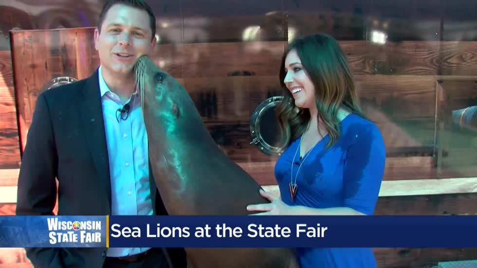Wisconsin State Fair: Meet Zoey the Sea lion