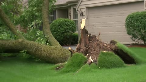 Severe storms take down trees in Cedarburg, Mequon