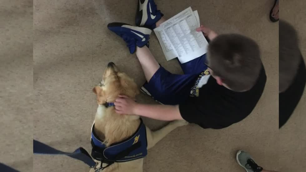Mukwonago High School 'facility dog' provides outlet for students with special needs