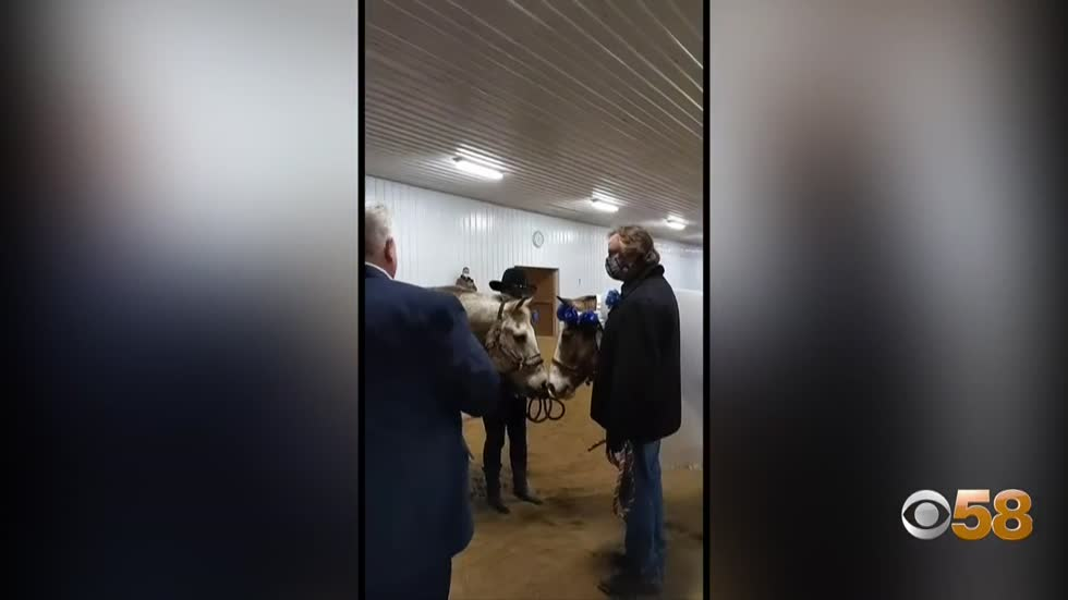 Midwest Therapeutic Riding holds horse wedding for pair of therapy...