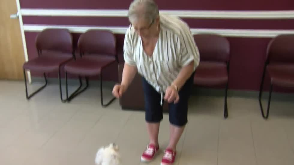 Racine woman spends decades dedicated to saving dogs she loves