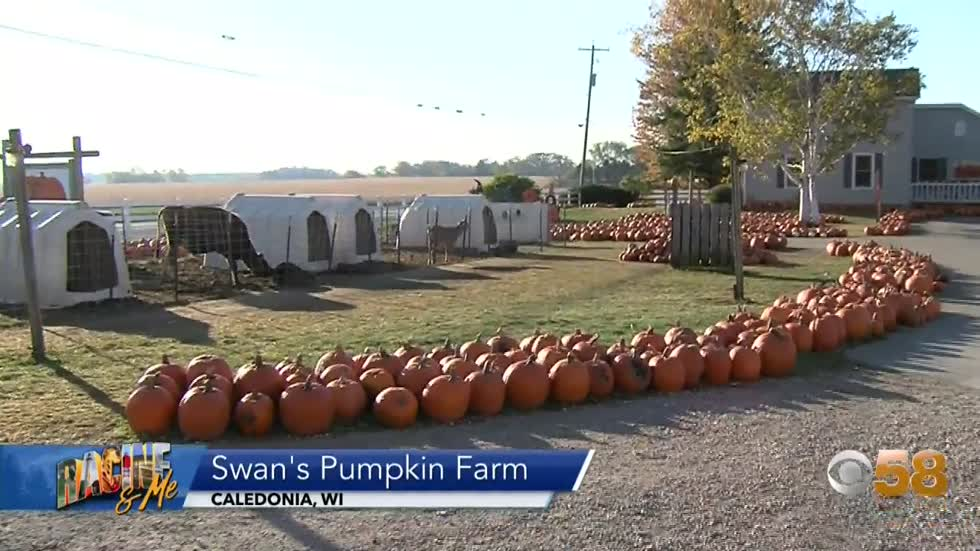 Swan's Pumpkin Farm
