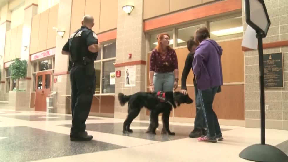 Therapy dogs back at work in Wausau schools