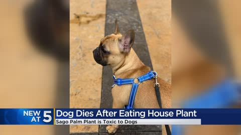 Local couple raising awareness after losing dog to toxic household plant