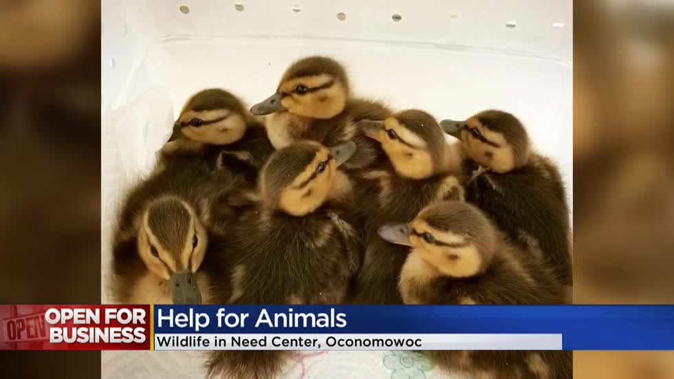 "Oconomowoc's ""Wildlife in Need"" taking in wounded animals again after partial shutdown during the pandemic"