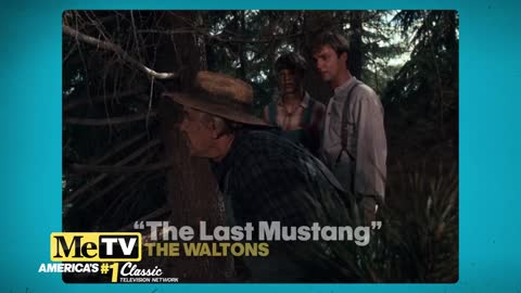 It's the last mustang on the Walton's Mountain!