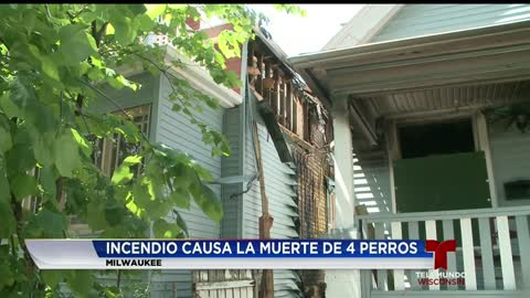 Perros fallecen en incendio provocado en Milwaukee