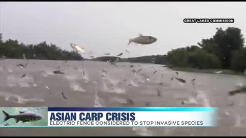 Asian Carp Crisis in the Great Lakes